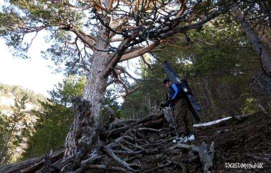 Aproximación algo penosa por el bosque