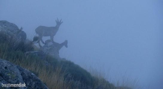 Pensarán que a dónde vamos con esta niebla...