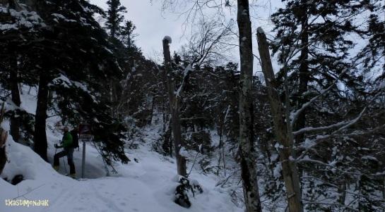 Por el bosque de selva de Oza...
